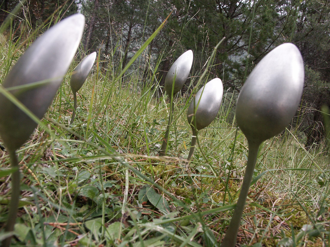 Spoons in the meadow | Daniel Barbé Farré