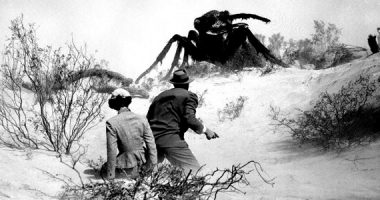 Què són els insect media?