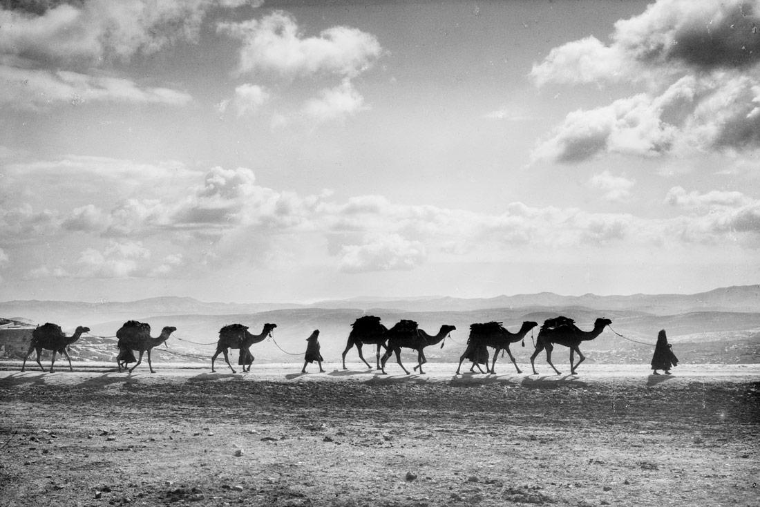 Egyptian camel transport passing over Olivet, 1918